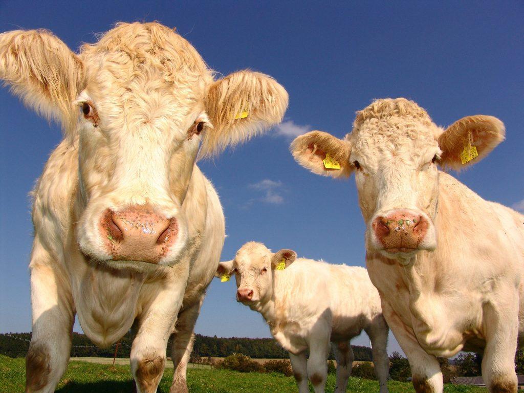 5 façons dont la technologie a changél'agriculture