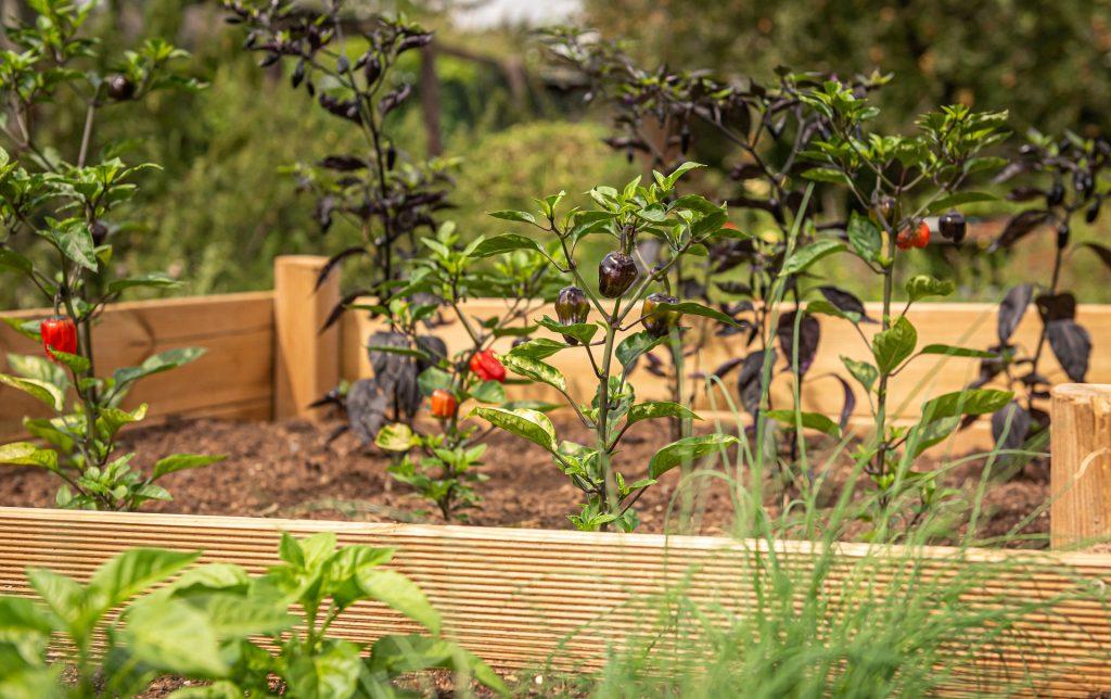 Des conseils simples pour savoir comment faire un lit de jardin surélevé